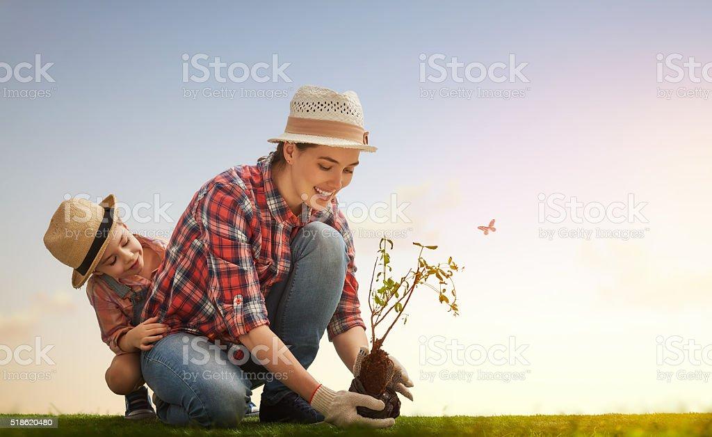 girl plant sapling tree stock photo