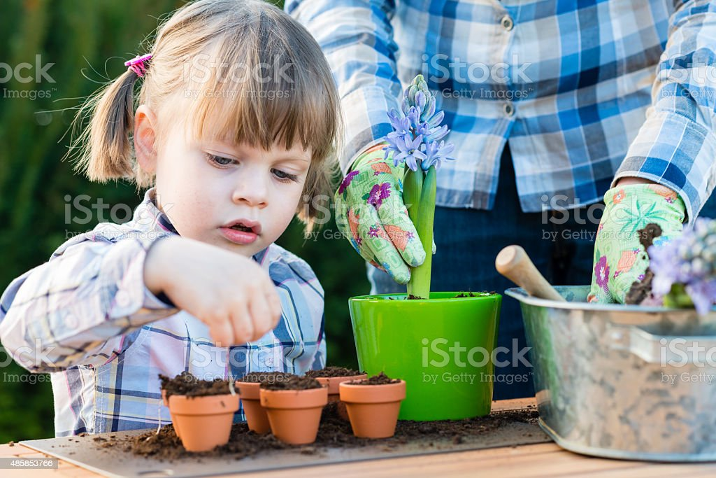 Girl planting flower bulbs with her mother stock photo