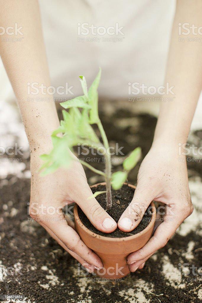 Girl planting seedling in ceramic flower pot stock photo