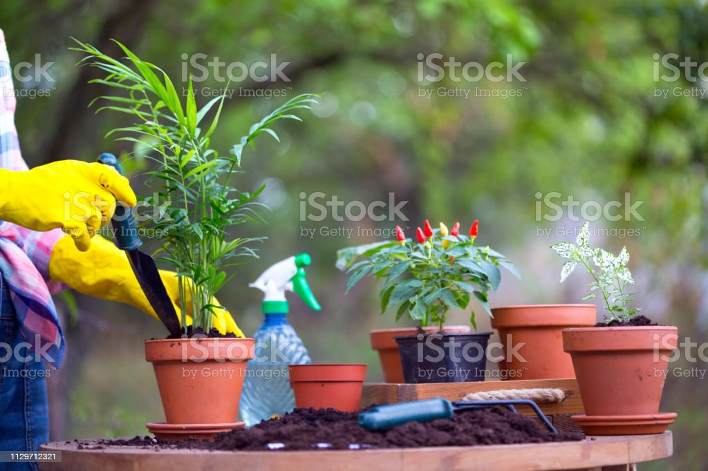 Girl plants a flowers in the garden. flower pots and plants for transplanting\ n - Stock image . & Girl Plants A Flowers In The Garden Flower Pots And Plants For ...