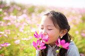 コスモス畑で遊ぶ少女