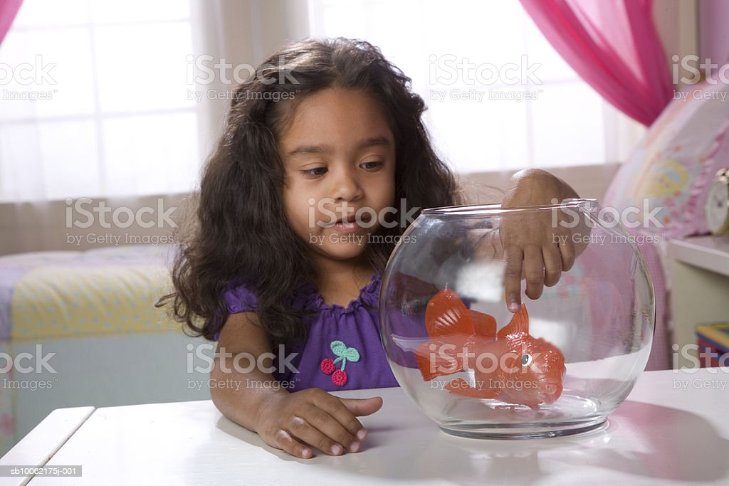 Girl (4-5) playing with fish in bowl photo libre de droits