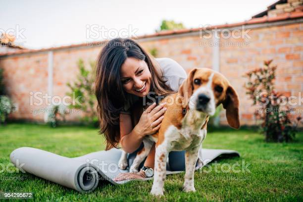 Girl playing with her beagle dog in yard picture id954295672?b=1&k=6&m=954295672&s=612x612&h= aam99y dl5oq3r0zhuou nhdwnfjnrwqph1zvzsum0=