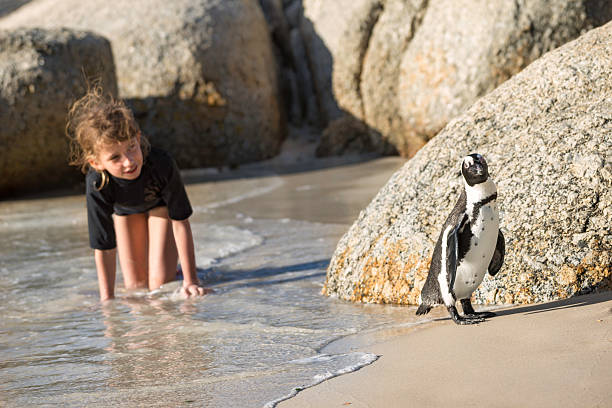 Girl playing with penguin at the beach stock photo