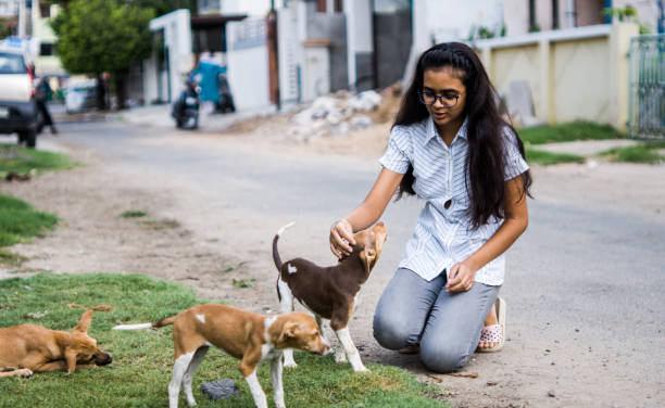 girl playing with puppies Young teenager girl playing with Indian street puppies cute teen couple stock pictures, royalty-free photos & images