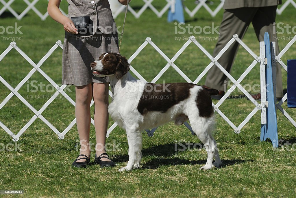 Girl poses with her Brittany dog for the judges stock photo