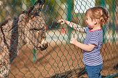 Girl reaching for donkey through chainlink fence. Female is looking at mammal on sunny day. She is wearing casuals.