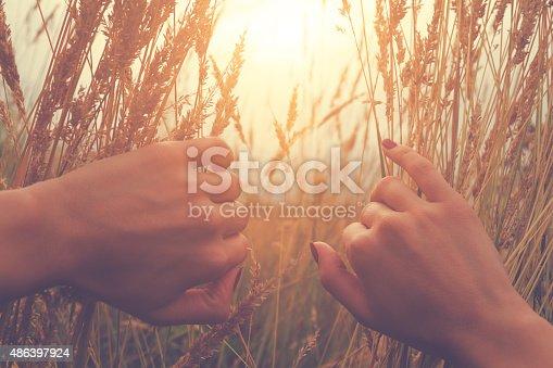523172398istockphoto Girl relaxing in a wheat-field. 486397924