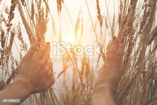 523172398istockphoto Girl relaxing in a wheat-field. 487068322