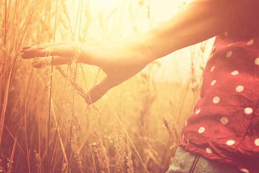 523172398 istock photo Girl relaxing in a wheat-field. 491903958