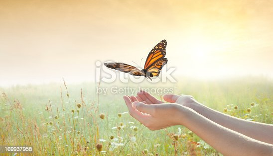 Girl releasing a butterfly over a sunset field