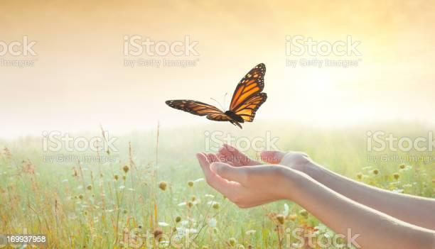 Girl releasing a butterfly picture id169937958?b=1&k=6&m=169937958&s=612x612&h=hlra gtbz1la4cbxnt6176p8muwvskzovbltfxyu1tc=