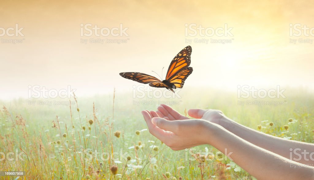 Girl releasing a butterfly stock photo