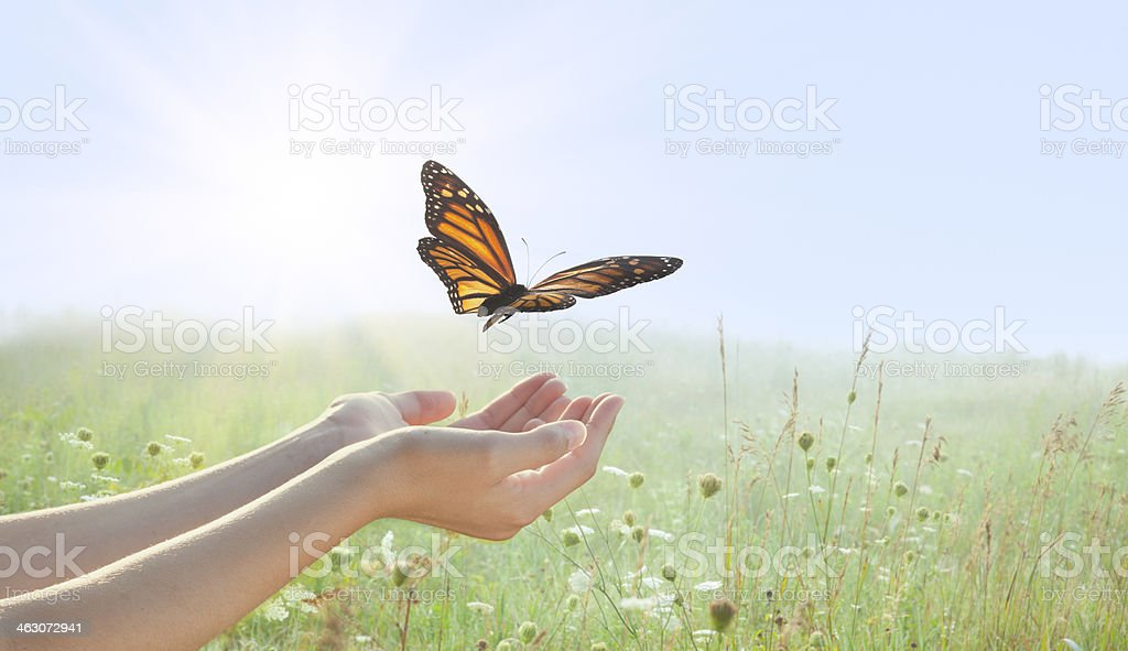 Girl releasing a monarch butterfly stock photo
