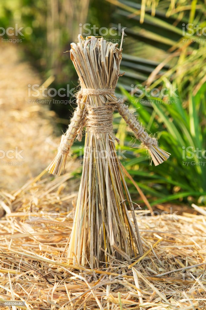 Girl Rice straw puppets in organic form stock photo