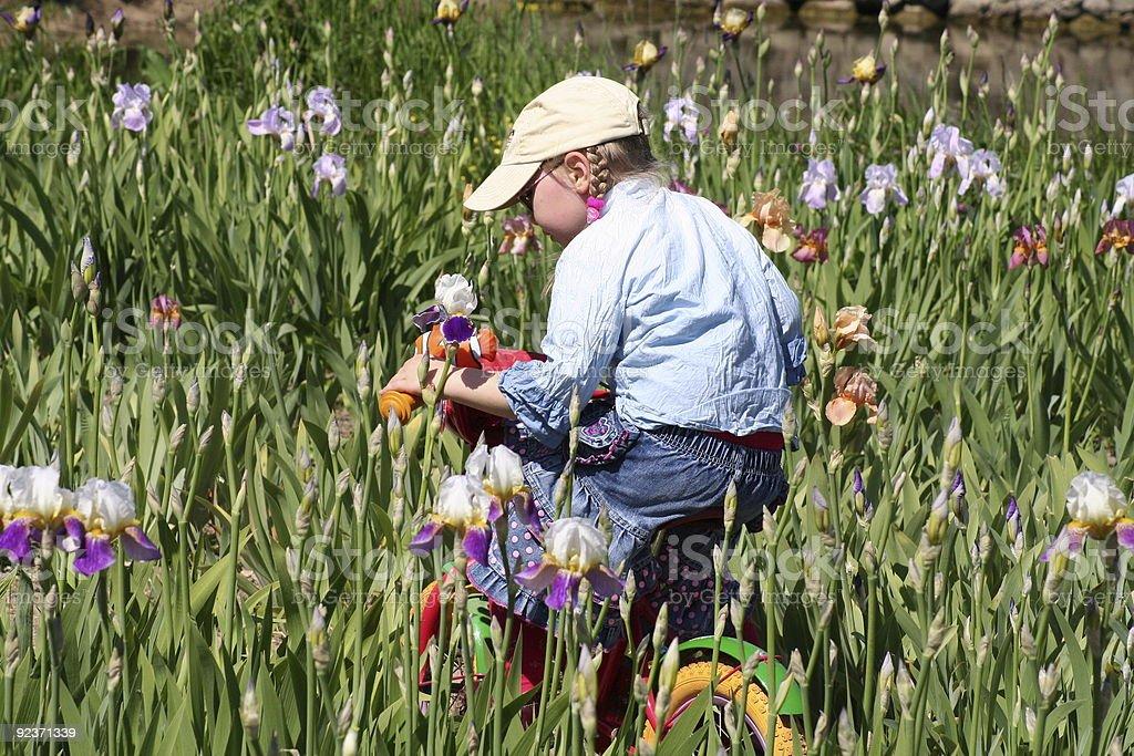 Mädchen Reiten Fahrrad in der irises meadow Lizenzfreies stock-foto