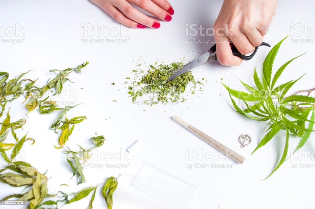 Girl smashing marijuana leafs with scissors stock photo