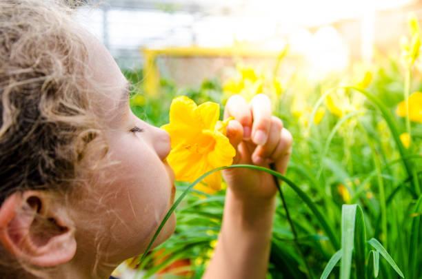 girl smelling yellow hemerocallis - percezione sensoriale foto e immagini stock
