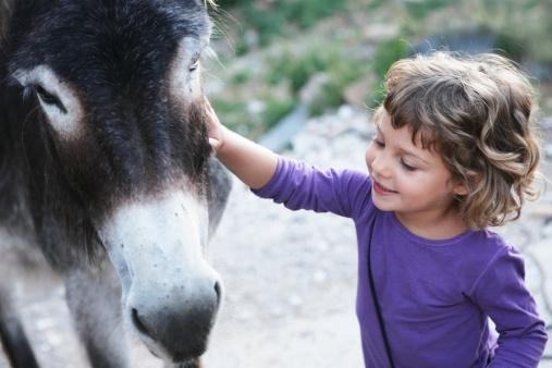 girl smiling petting to donkey