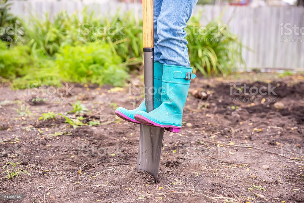 Girl Standing on Spade Shovel Digging in Garden stock photo