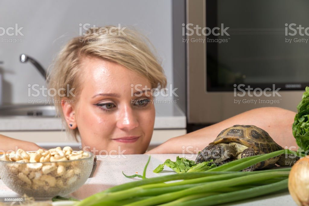 Girl stares at tortoise eating salad stock photo