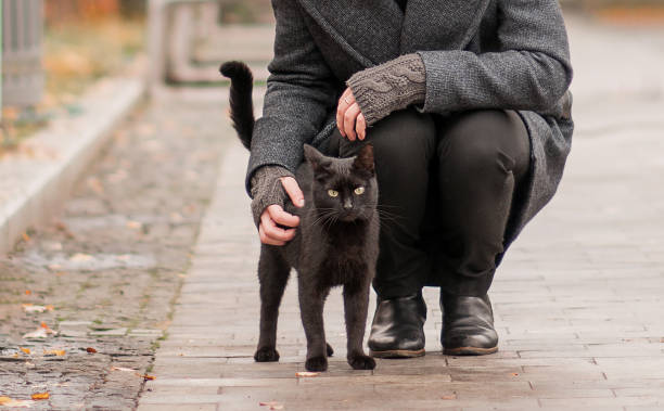 girl stroking a black cat on the street girl stroking a black cat on the street black cat stock pictures, royalty-free photos & images