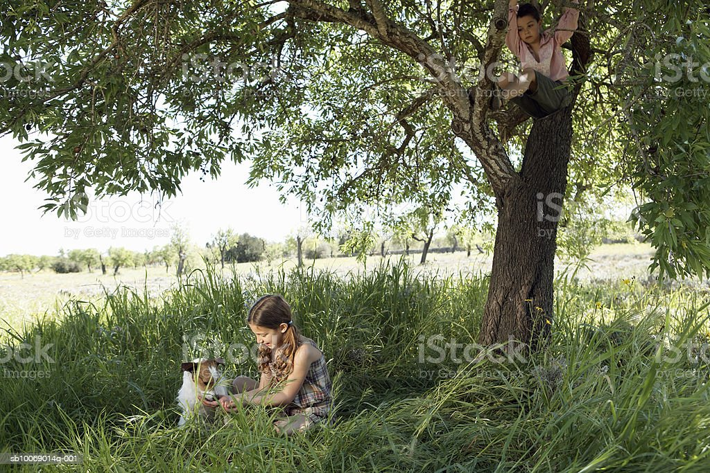 Girl (8-9) stroking dog, boy (8-9) climbing tree royalty-free stock photo