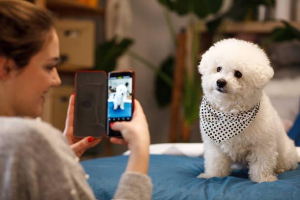 Mädchen fotografieren ihren Hund mit Smartphone – Foto