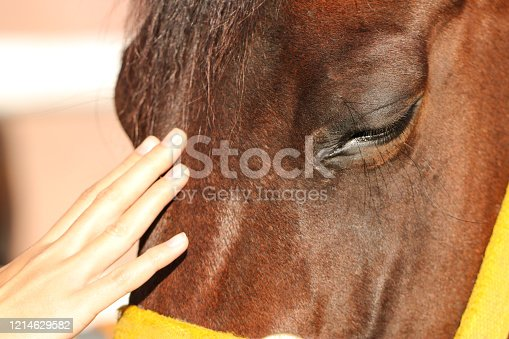 istock Girl touching horse head to show her affection 1214629582