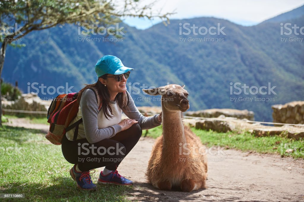 Girl traveller with lama stock photo
