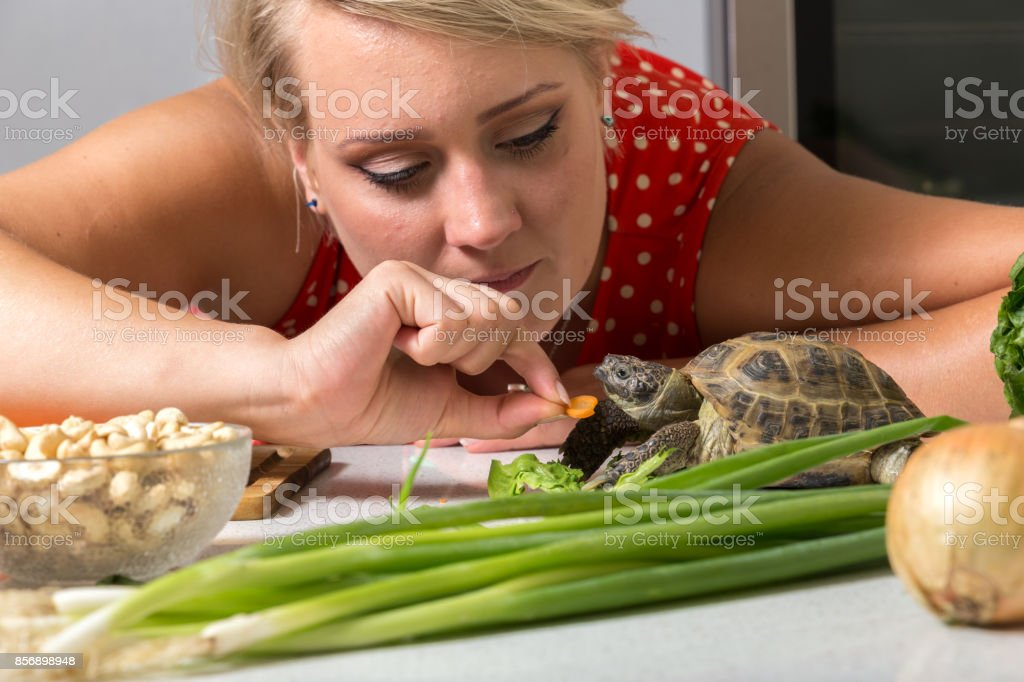 Girl tries to feed tortoise with piece of carrot stock photo