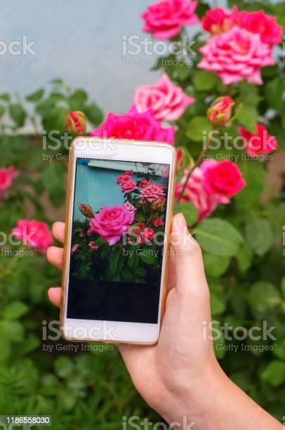 Photo of girl using smart phone