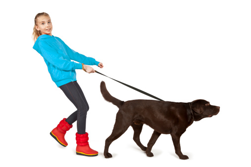 A girl walking a big brown dog on a leash