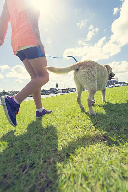 Girl walking a dog in the park picture id639529314?b=1&k=6&m=639529314&s=612x612&w=0&h=zrm p33gs po5furrhkk9rq7xhfbsxku8x7mwhtjrva=
