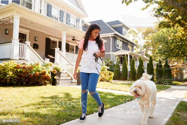 Girl walking dog along suburban street picture id904482472?b=1&k=6&m=904482472&s=612x612&h=vuhgxiww5uc1g5crfmfkfpggzfquq5yammkbd6rehd8=