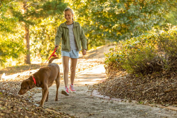 Girl Walking Her Dog in a Park stock photo