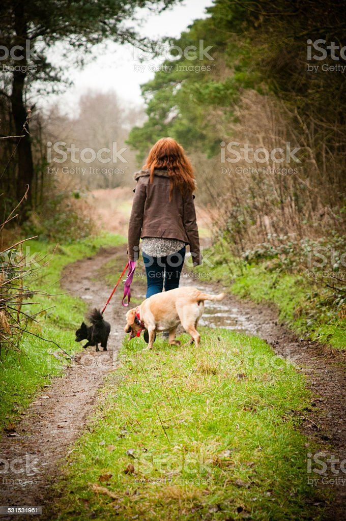 Girl walking her dogs stock photo