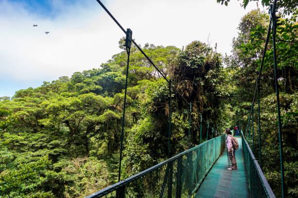 girl walking on hanging bridge in cloudforest - monteverde - costa rica stockfoto's en -beelden