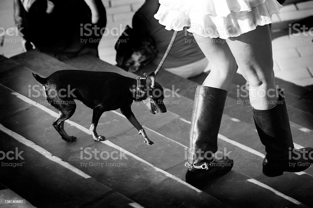 Girl Walking the dog out royalty-free stock photo