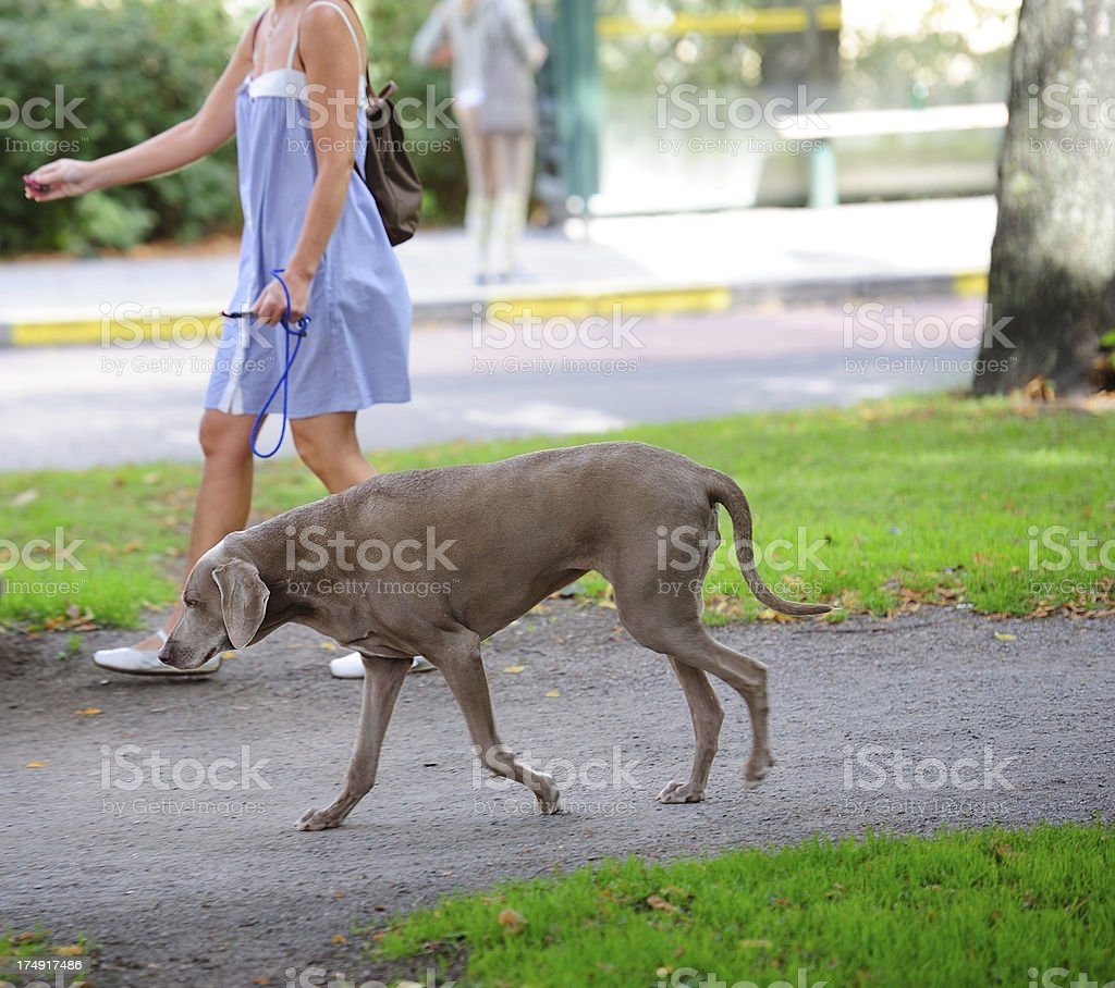 Woman/girl with brown relaxed dog
