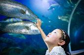 girl watching an aquarium