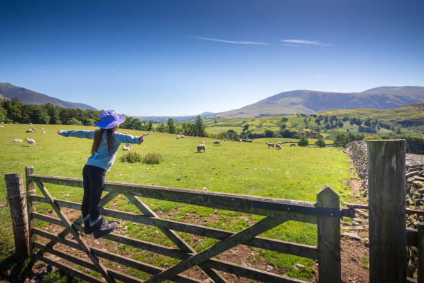 Girl watching sheep in countryside near Keswick, England stock photo
