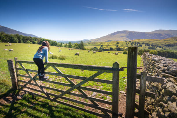 Girl watching sheep in countryside near Keswick, England Keswick is a beautiful town located in the English Lake District, where the lush green hills meet the tranquil lake of Derwentwater. Shot in Summer. cumbria stock pictures, royalty-free photos & images