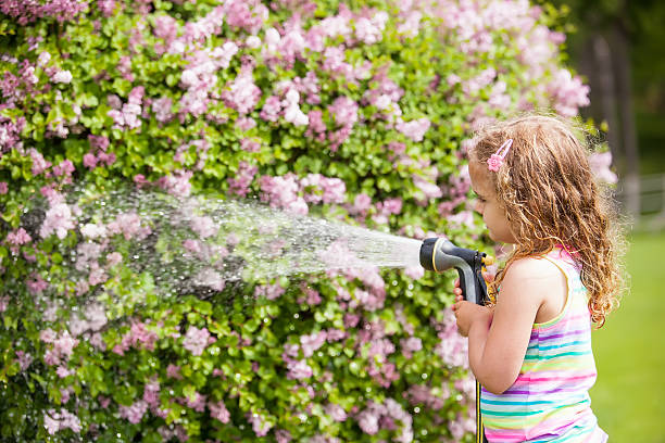 Girl Watering Lilac Bush Close-up of a young girl watering a lilac bush that is starting to blossom. goosebumps stock pictures, royalty-free photos & images