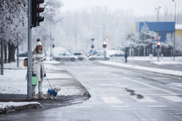 Girl with a dog crossing the road picture id1135855426?b=1&k=6&m=1135855426&s=612x612&w=0&h=dcjf0y4gixjn8qrvdk32zs o4appxnfskygxgzdrkxq=