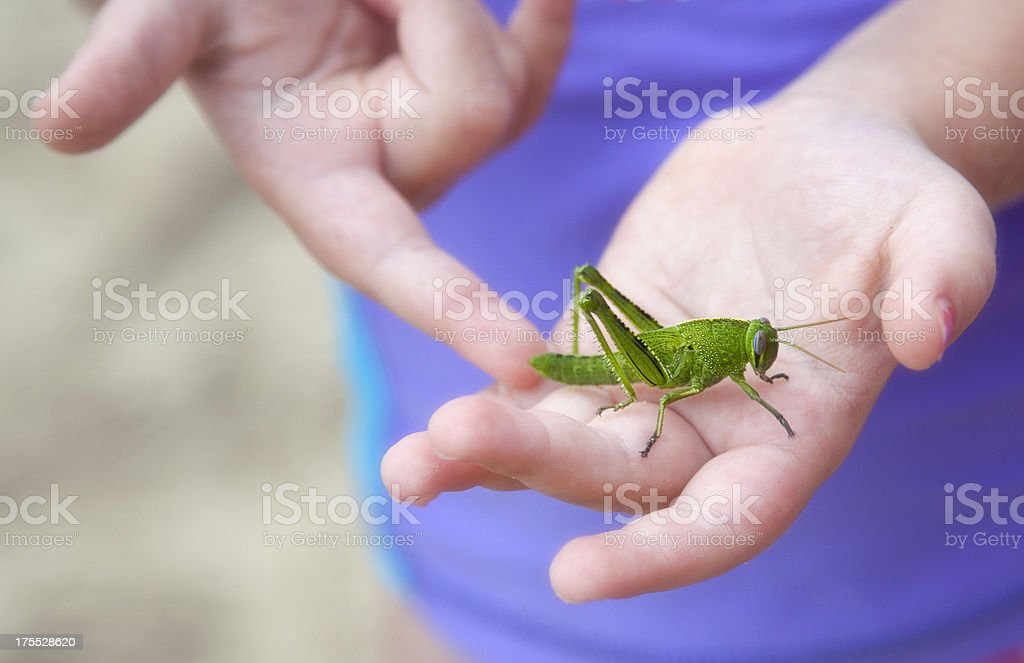 Girl With A Grasshopper stock photo