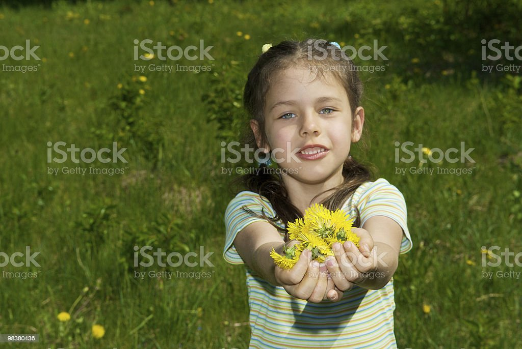 girl with a handful of dandelions royalty-free stock photo