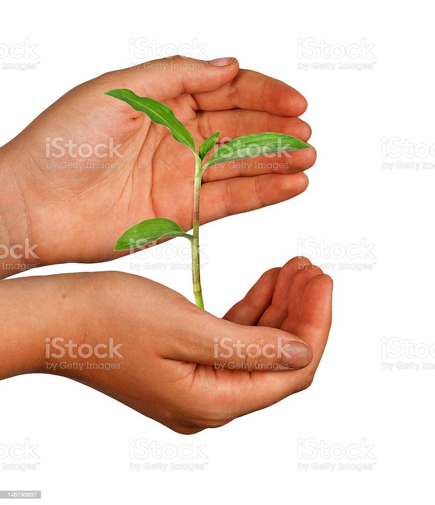 Girl with a plant royalty-free stock photo