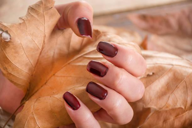 mädchen mit braunen maniküre am finger hält trocken herbst blatt in der hand - gelnägel stock-fotos und bilder