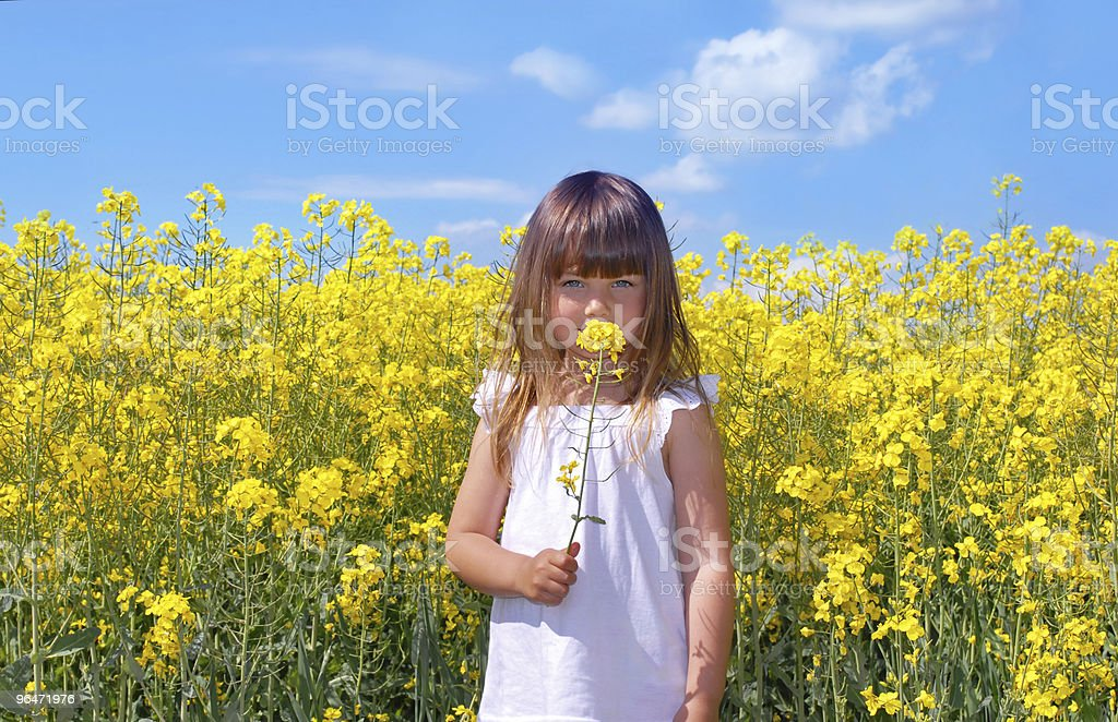 Girl with canola royalty-free stock photo